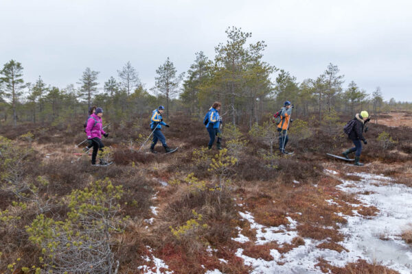 hikers in the bog with snowshoes