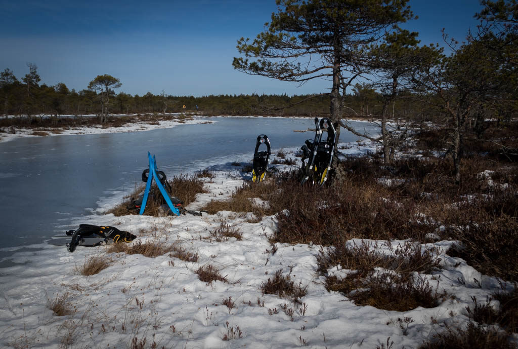 Snowshoes in the bog