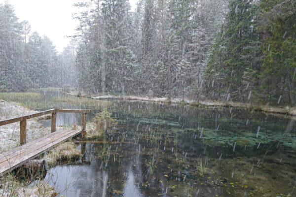 lumesadu Norra allikatel